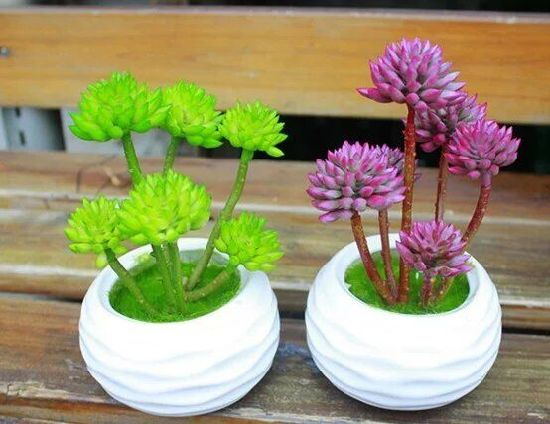 Artificial Plants and Flowers of Mini Plant Succulent Gu-SD0276 pictures & photos