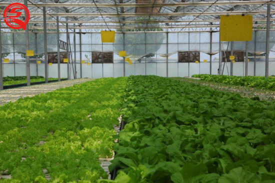 Multi-Span Double/Single Layer Plastic Film Garden Greenhouse for Sale