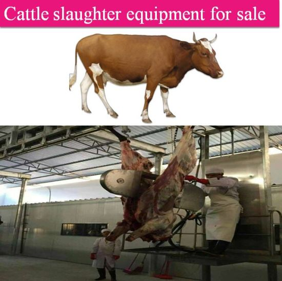 Cattle Slaughter Equipment for Sale