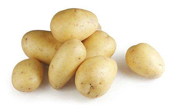 Top Quality Fresh Potato in Carton