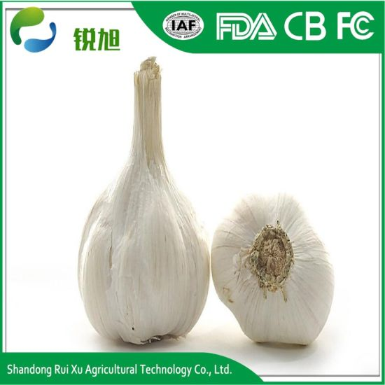 China Garlic Exporter Natural Fresh Normal White Garlic Price for Sale