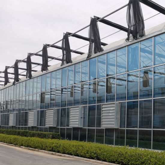 China Venlo Type Glass /Tempering Glass/Float Glass Greenhouse for Planting Vegetables/Flowers