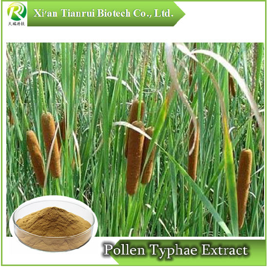Natural Raw Material Pollen Typhae Extract pictures & photos
