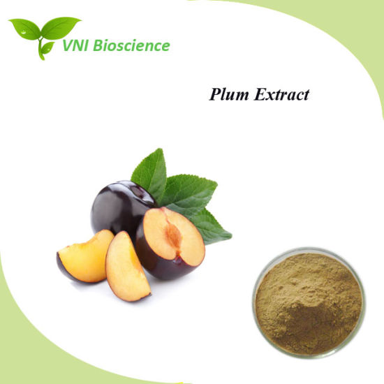 ISO SGS Certified Prugna Extract/Prunus Salicina Plant Extract/Plum Extract