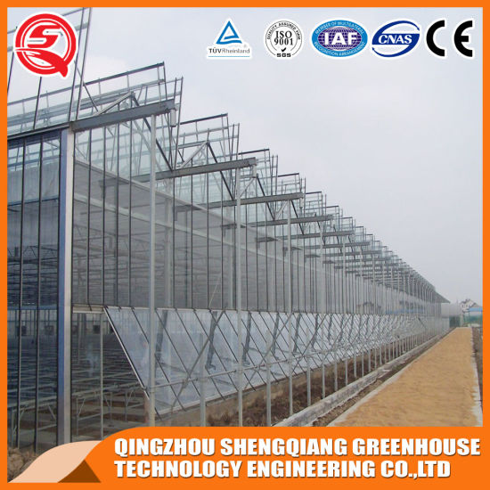 Agriculture Productive Multi-Span Hydroponic System Glass Greenhouse for Planting Tomato/Cucumber/Strawberry/Pepper/Cucumber/Sightseeing/Exhibition