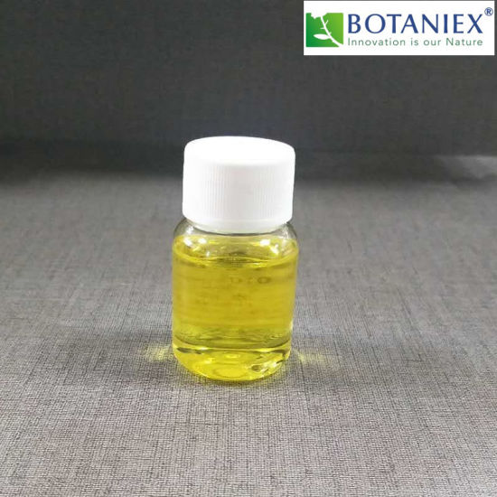 Aroma Ginger Oil/Ginger Essential Oil 100% Volatile by Scfe-CO2