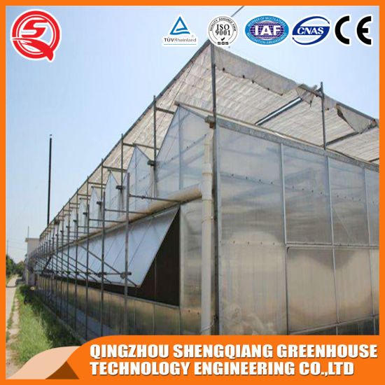 Agriculture Multi Span PC Sheet Green House with Hydroponics System for Tomato/Cucumber/Strawberry Planting