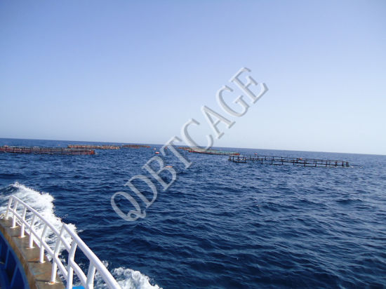 Farming Net Cage /Fish Net/Fishing Net pictures & photos