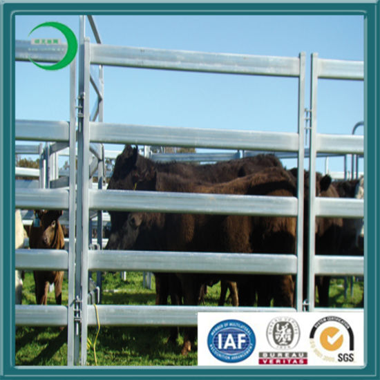 Galvanizing Yard Fencing for Live Cattle pictures & photos