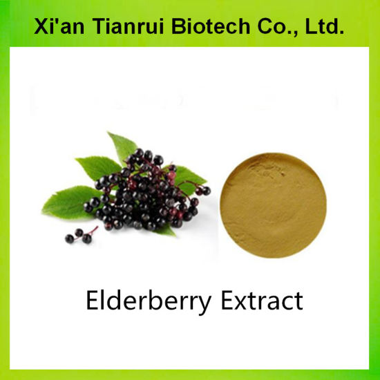 High Quality Elderberry Extract 5% Anthocyanidin Powder pictures & photos
