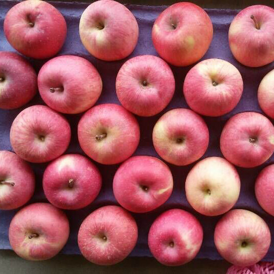 Golden Supplier of Fresh Red FUJI Apple pictures & photos