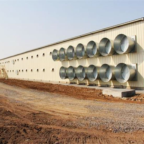 Prefab Chicken Farm Construction In Poultry House With Modern Design