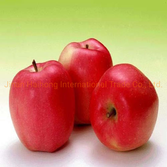Supply New Crop FUJI Apple Red Apple From Shandong