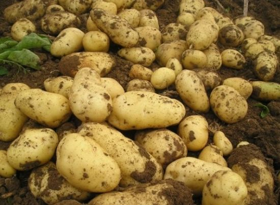 New Harvest China Export Holland Fresh Potato Seed/Frozen Potato pictures & photos