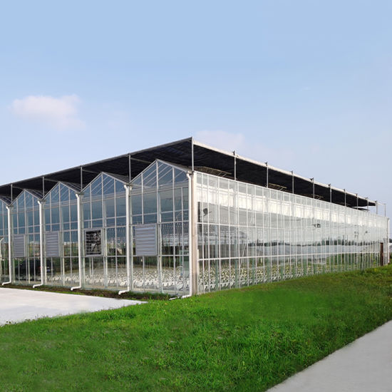 Glass Greenhouse Large Agricultural for Plant Growth