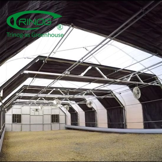 Multispan hemp CBD greenhouses for planting