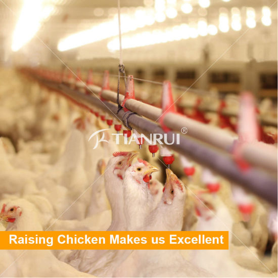 High Quality Broiler Chicken Battery Cage System for Sale