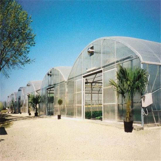 Farming Plastic Greenhouse for Vegetables/Flowers with Hydroponic Systems Price