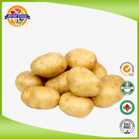 New Crop Fresh Holland Potato with Good Quality