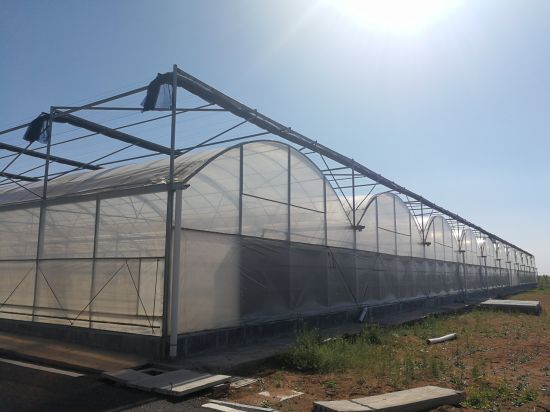 Agriculture Multi-Span Flower/Vegetable Plastic Film Greenhouse with Hydroponicsystem