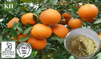 Citrus Aurantium Extract Immature Bitter Orange Extract: Synephrine 6%-95% by HPLC; Synephrine 15% by UV (CAS No.: 94-07-5)