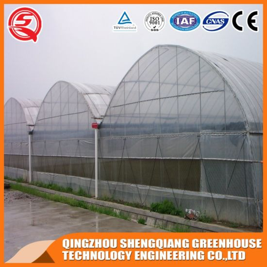 China Hydroponic Agriculture Productive Plastic Film Garden Greenhouse for Sale