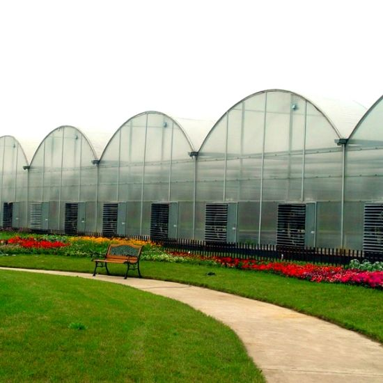 Commercial Multi Span Plastic Green House For Vegetable Growing