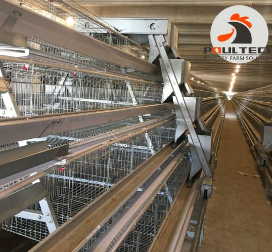 Poultry Equipment Price a Type Layer Cage Chicken Farm pictures & photos