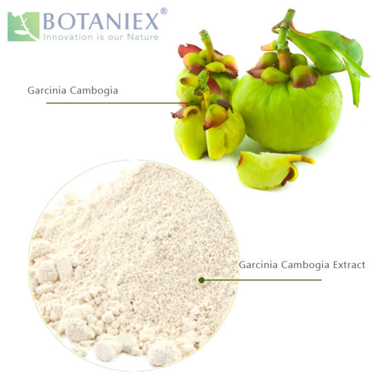China C Natural Garcinia Cambogia Extract Powder Hydroxycitric Acid For Weight Loss China Garcinia Cambogia Extract Hydroxycitric Acid From Garcinia Cambogia