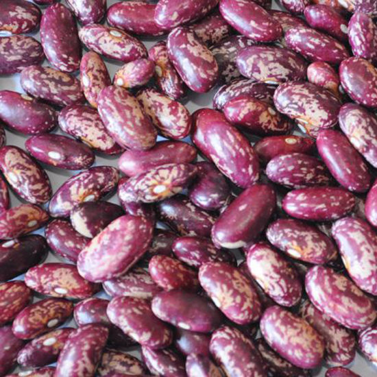 China Full Extension Good Sell Organic In Bulk Long Shape Natural Growth Purple Speckled Kidney Beans China Export Kidney Bean 2019 Crop
