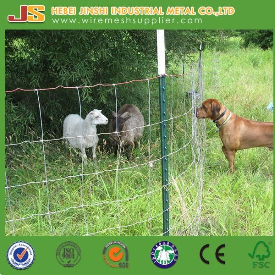 Hinge Joint Field Fence Wire, Goat Wire Fence pictures & photos