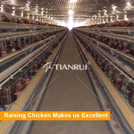 Automatic Commercial Chicken Layer Cage/Battery Layer Cage for 128 Birds with 4 tiers
