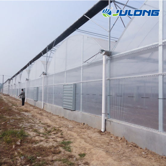 Tunnel Design Multi-Span Plastic Vegetables Agricultural Solar Greenhouse