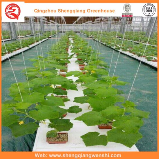 Multi-Span Hydroponic Grow System PC Sheet Greenhouses Vertical Farming Companies