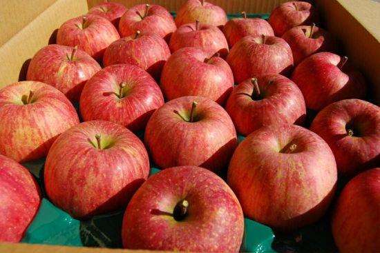 Grade a Red FUJI Apple