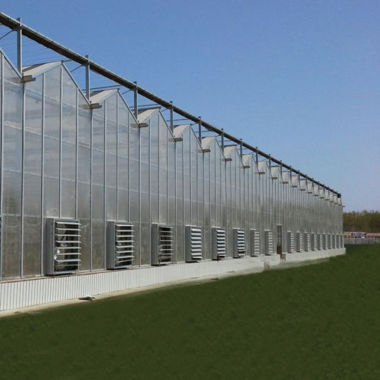 Multi-Span Arch/Venlo Type Polycarbonate Board/PC Greenhouse for Russia Market /The Belt and Road Initiative/Cucumber/ Lettuce/ Pepper Planting