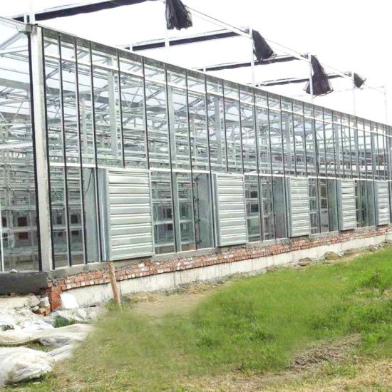 Agriculture Float Glass Greenhouse for Tomato