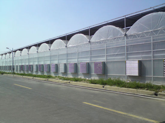 Best-Selling Central Asian Multi-Span Film Greenhouse with Irrigation System