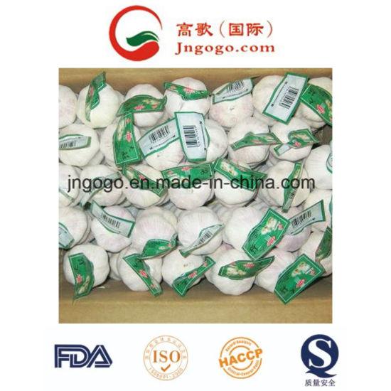 New Crop Carton Packing White Garlic 5.0cm