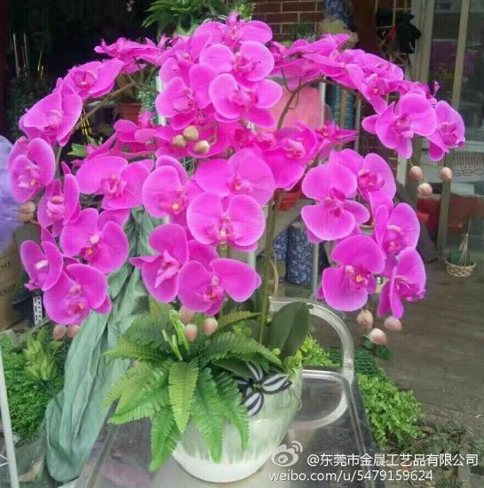Best Selling 1 Head Orchid Flower Gu1124192751 pictures & photos