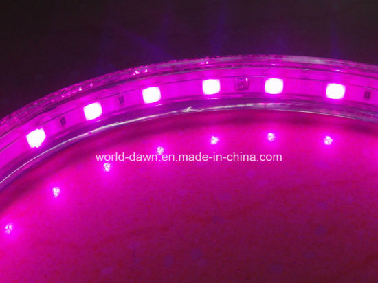 High Voltage LED Rope Light LED Strip pictures & photos