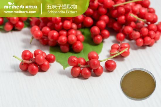 Liver Protection Ingredients Schisandra Extract Schisandrins 1%-5%