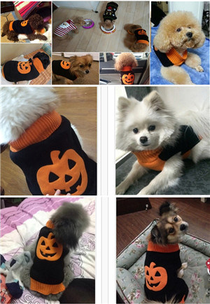 Design Special Holloween Dog Products Pumpkin Pet Costumes pictures & photos