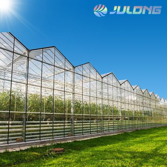 Turnkey Horticultural Venlo Poly Green House with Hydroponics System Growing