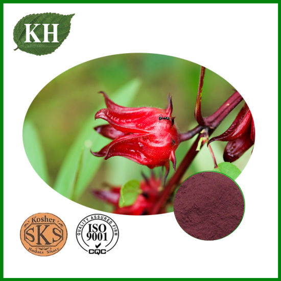 Supply High Quality Roselle Extract 10%-30% Polyphenol pictures & photos