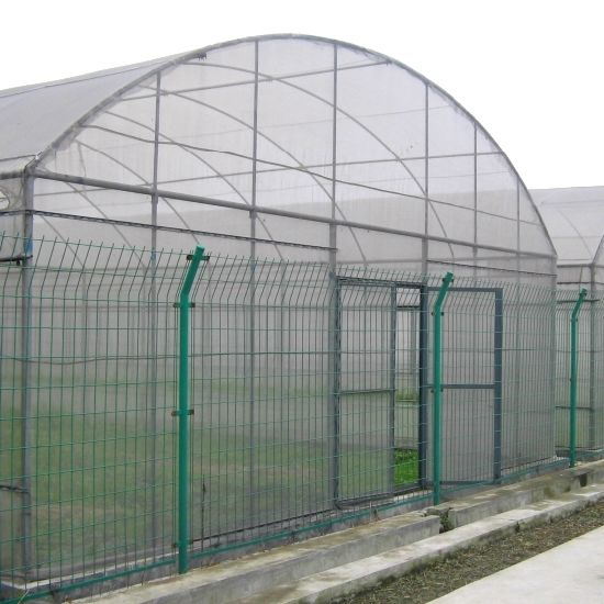 China Single-Span Large Film Greenhouse for Flowers pictures & photos