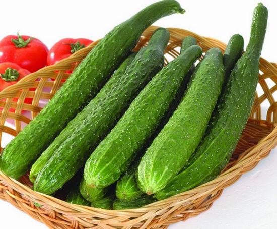 China Cucumber Extract - China Cucumber Extract, Cucumber