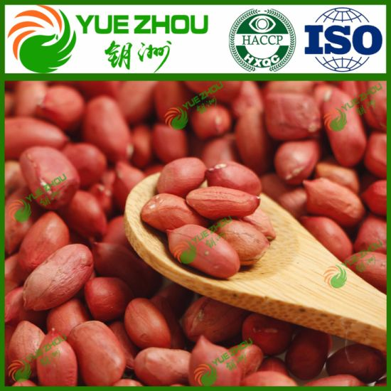 2019 New Crop Pearnut Red Skin Peanut Kernel From China with Cheap Price