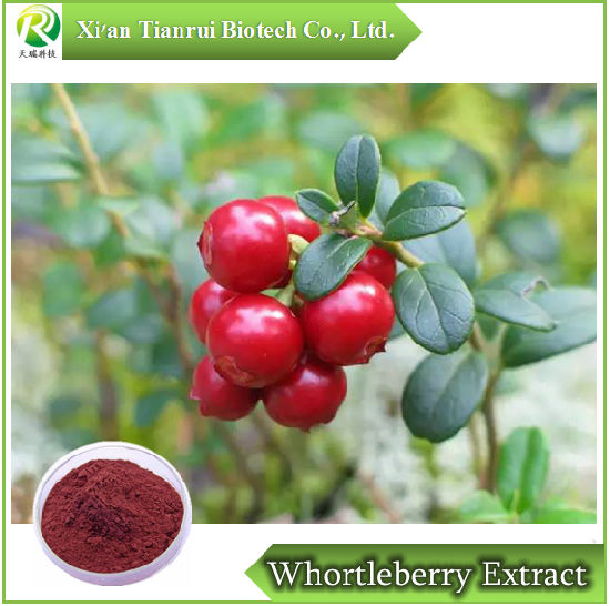 High Quality Huckleberry /Cowberry Blueberry/ Whortleberry Extract Powder pictures & photos