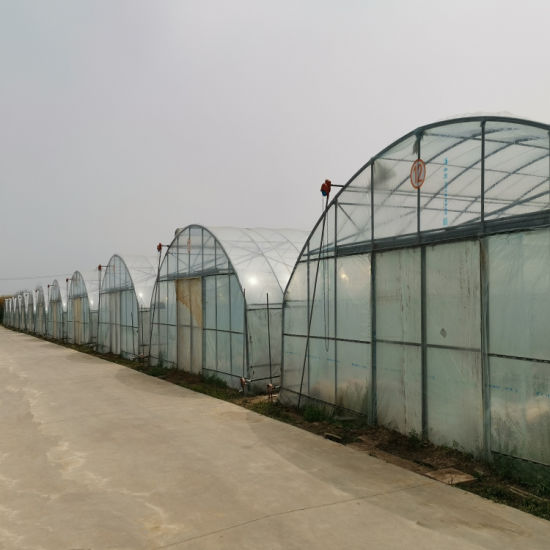 Agricultural Equipment Film Greenhouse for Tomato Planting